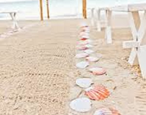 design_aisle_seashell