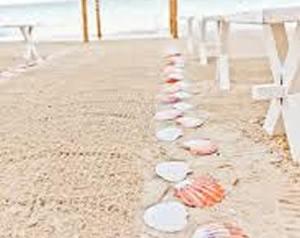 design_aisle_seashell